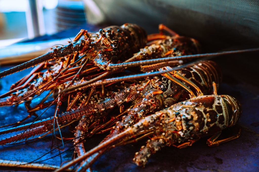 gourmand's guide lobster